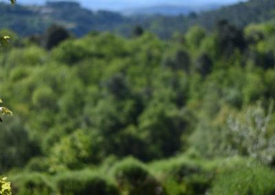 La Haute Maurelle⎥Gîte La Clède - La vue depuis la terrasse extérieure